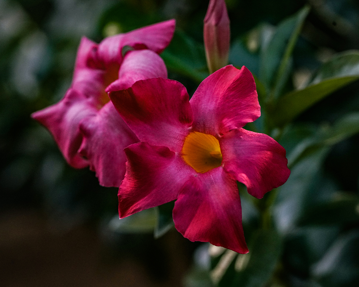 Sony a7r2, FE 85mm (w/extension tube), 1/100 @f7.1 ISO 2500