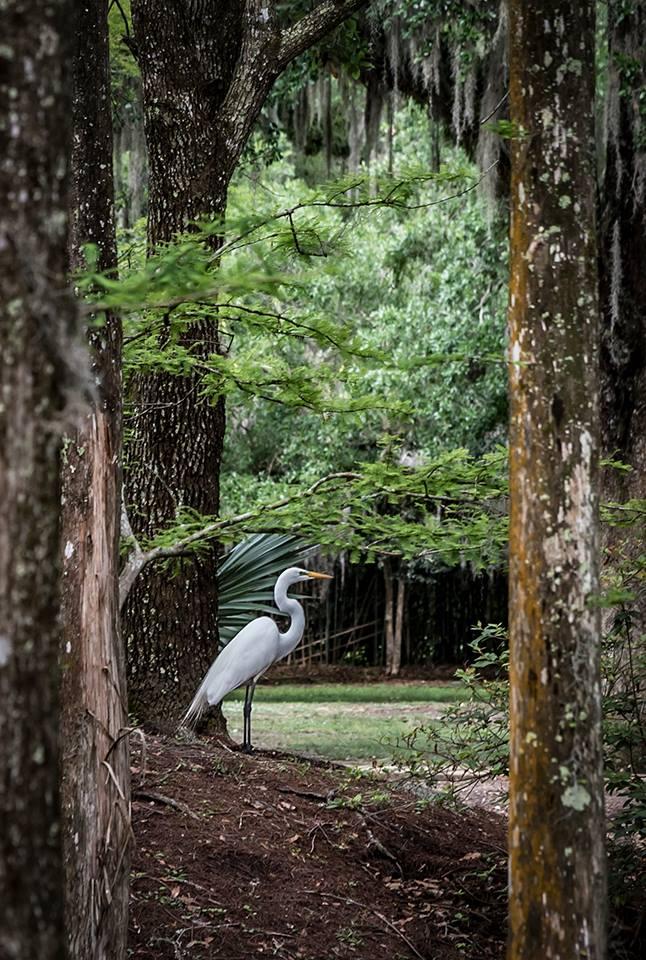 Jungle Gardens, Avery Island, Louisiana Sony A7s, FE 90mm Macro G, 1/250 @ f 6.3, ISO 800
