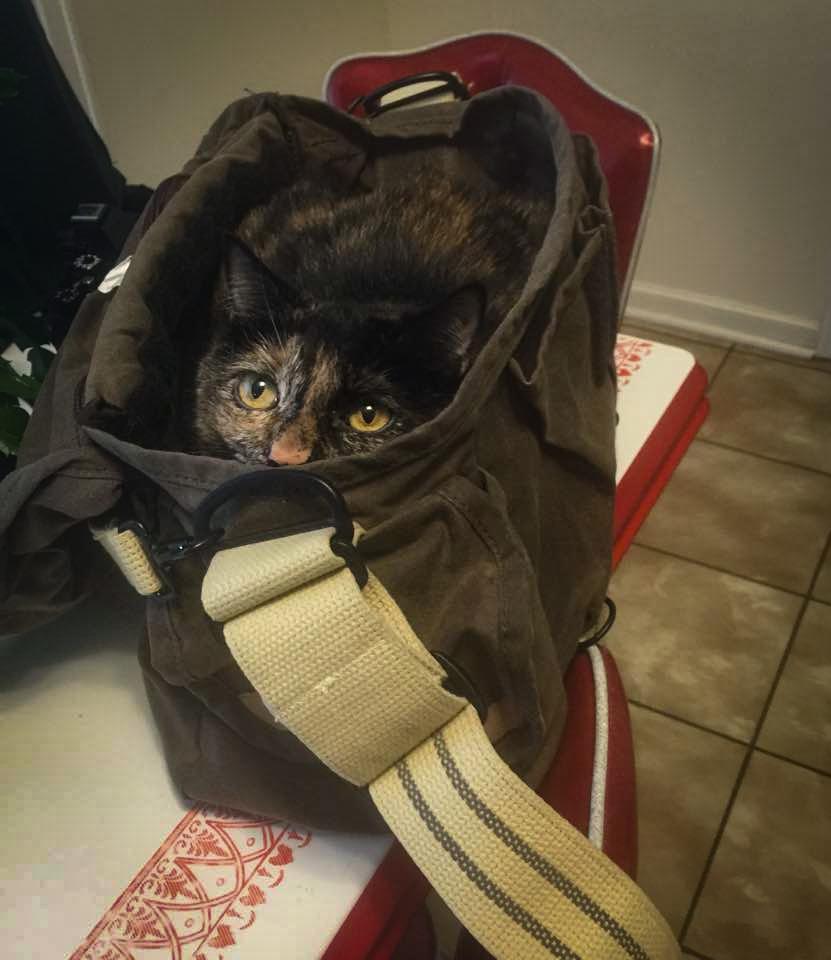 sasha-bag